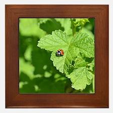 Ladybug 8x10 Framed Tile