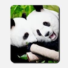 Cute Panda Cubs Mousepad