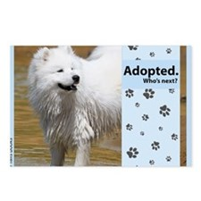 Samoyed Postcards (Package of 8)