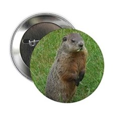 "Groundhog eating 2.25"" Button"