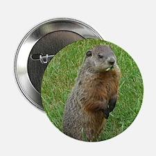 "Groundhog eating 2.25"" Button"
