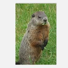 Groundhog eating Postcards (Package of 8)