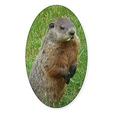 Groundhog eating Decal