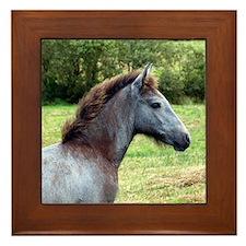 """""""Connemara Foal 3"""" Framed Tile"""