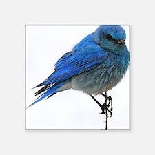 "Mountain blue bird Square Sticker 3"" x 3"""