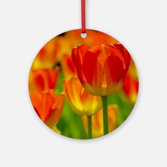 Orange tulip Round Ornament