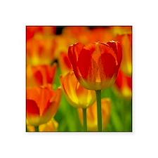 """Orange tulip Square Sticker 3"""" x 3"""""""