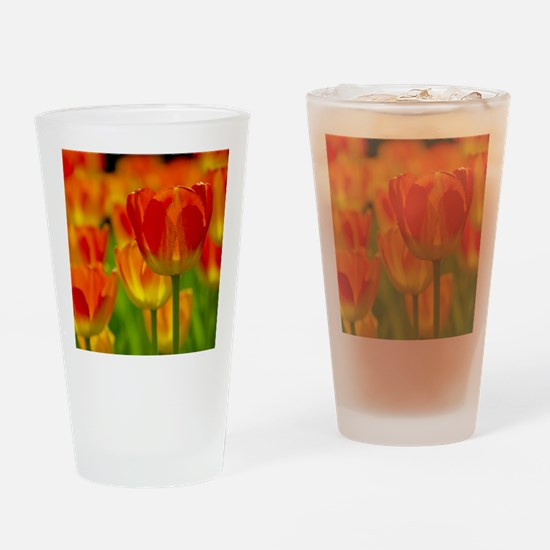Orange tulip Drinking Glass