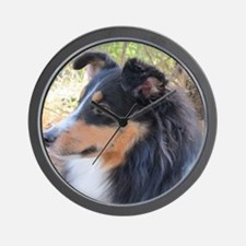 Tri-color Sheltie head study Wall Clock