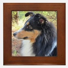 Tri-Color Sheltie Head Framed Tile