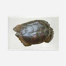 snapping turtle 2 Rectangle Magnet (10 pack)