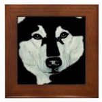 Malamute Black & White Framed Tile