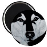 Malamute Black & White 2.25