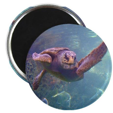 "sea turtle 2 2.25"" Magnet (10 pack)"