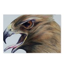 Red Hawk Postcards (Package of 8)