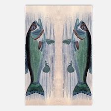 Vintage Fish Postcards (Package of 8)