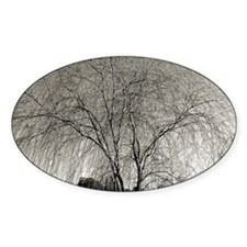 Willow Tree #2 Decal