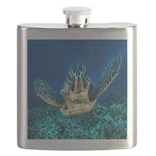 macro sea turtle Flask
