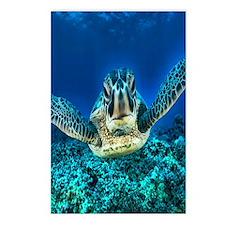 macro sea turtle Postcards (Package of 8)