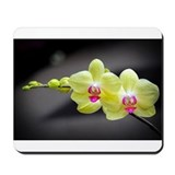 Orchid Mouse Pads