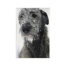 Irish Wolfhound Rectangle Magnet