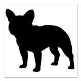 French bulldog Square Car Magnets