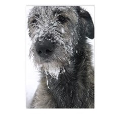 Irish Wolfhound Postcards (Package of 8)