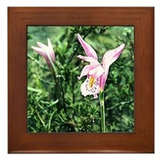 Swamp Pink Framed Tile