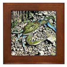 Blue Claw Crab Framed Tile