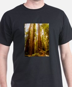 Redwoods T-Shirt