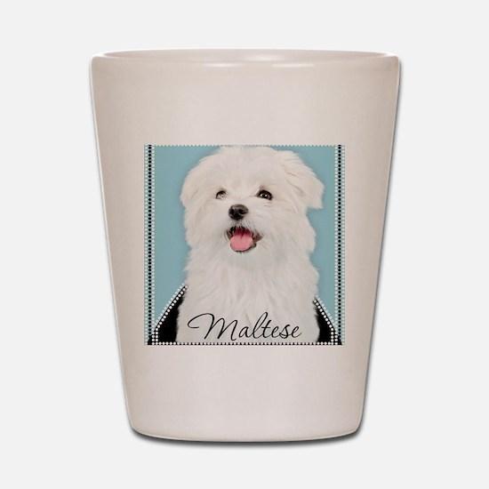 Cute Maltese Shot Glass