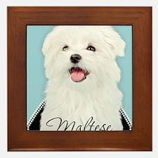 Cute Maltese Framed Tile