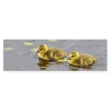 2 goslings Bumper Sticker