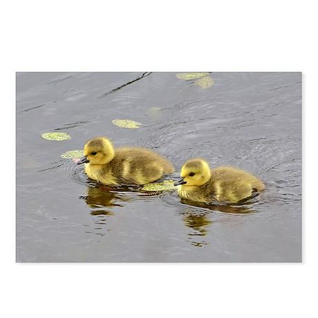 2 goslings Postcards (Package of 8)