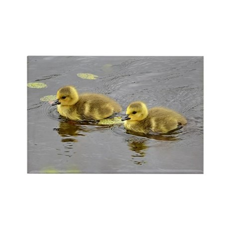 2 Goslings Rectangle Magnet