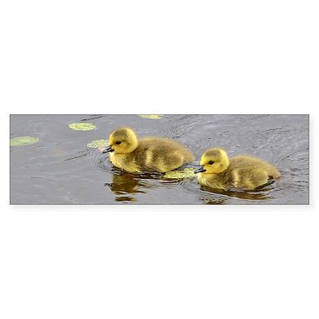 2 goslings Sticker (Bumper)