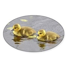 2 goslings Decal