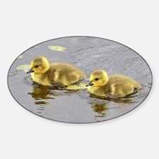 2 goslings Sticker (Oval)