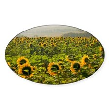 Field of sunflowers Decal