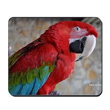 Green Wing Macaw Mousepad