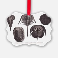Trilobites Ornament