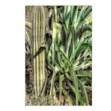 Cacti Garden Postcards (Package of 8)