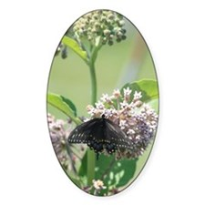 Black Swallowtail Butterfly on Milk Decal