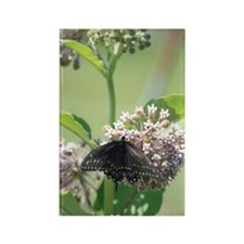 Black Swallowtail Butterfly on Mi Rectangle Magnet
