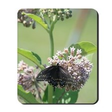 Black Swallowtail Butterfly on Milkweed Mousepad