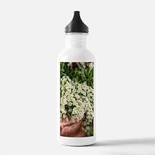 baby breaths Water Bottle