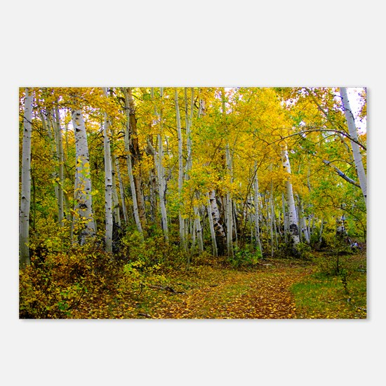 Autumn aspens Postcards (Package of 8)