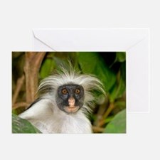 Zanzibar red colobus monkey Greeting Card