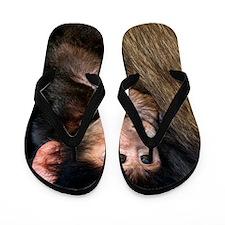 Young Chacma baboon Flip Flops