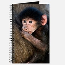 Young Chacma baboon Journal